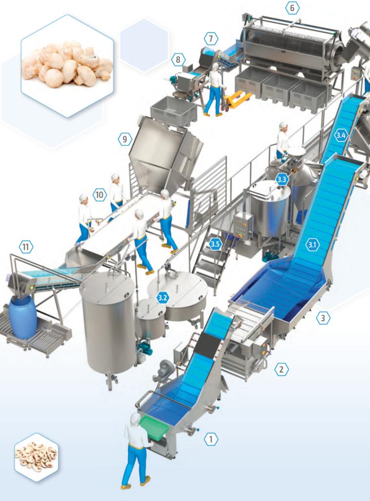 line for mushroom processing - washing, sorting, calibration, packaging.